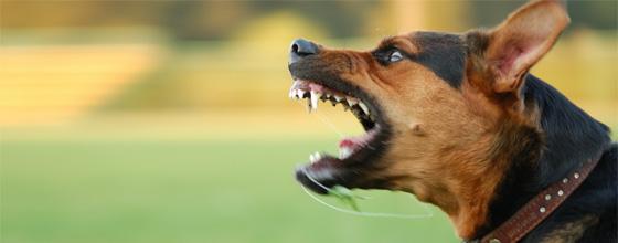Chicago Dog Bite Attorney