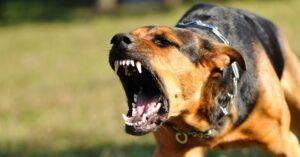 dog bite attorney chicago